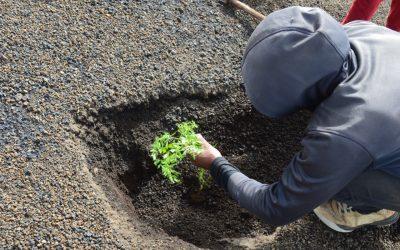 Associação Projecto Vitó prepara produção de dez mil plantas endémicas
